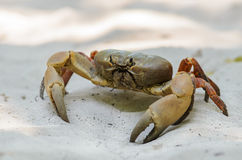 Crab Chicken on the beach Tachai Island Stock Photography
