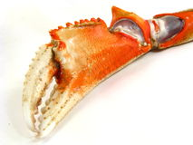 Crab Claw Royalty Free Stock Photography