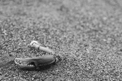 Crab claw on beach. In black and white photograph Royalty Free Stock Photography