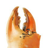 Crab Claw isolated on white background clipping path Royalty Free Stock Photos