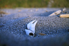 Crab claw in sand. Closeup of claw of crab in sand Stock Photography