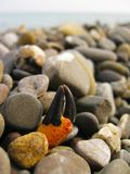 Crab claw sticking out of stones on the seashore stock photo