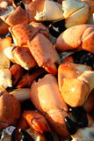 Crab claws background Royalty Free Stock Images