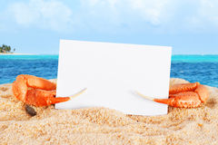 Crab claws with blank card Stock Photography