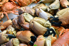 Crab claws Royalty Free Stock Photography