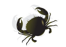 Crab. With claws on a white background Royalty Free Stock Image