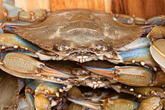 Crab Close=up Stock Images