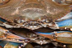 Crab Close-up Royalty Free Stock Images