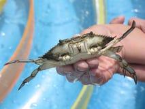 Crab closeup Royalty Free Stock Photos