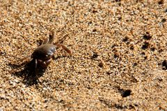 The Crab Closeup Royalty Free Stock Photo