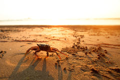 Crab on the coast royalty free stock photos