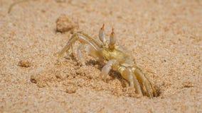 Crab on the coast of Sri Lanka. Stock Photos