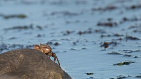 A crab coming out of the water stock photo