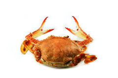 Crab cook Royalty Free Stock Image