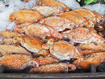 Crab cooked and freeze on ice. Stack of crabs cooked and freeze on ice in seafood supermarket Stock Photo