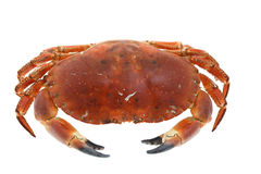 Crab cooked isolated on white Stock Photo