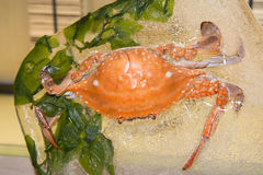A crab. Crabs of The dining room Royalty Free Stock Photos