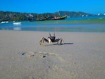 Thailand. Crab attacks royalty free stock photo