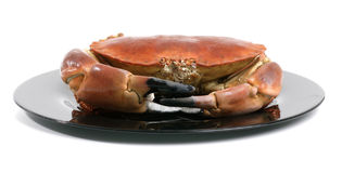 Crab on a dark plate Stock Photos