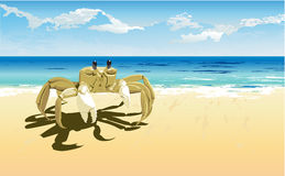 Crab daylight Stock Image