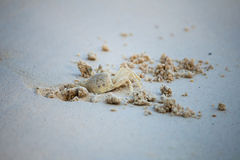 Crab dig the sand in on the beach. Create the safe property for life Royalty Free Stock Photos