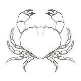 Crab drawing on white background. Hand drawn outline seafood illustration. Stock Image