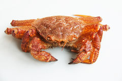 Crab (Erimacrus isenbeckii ) Stock Photography