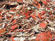 Crab feast Royalty Free Stock Image