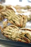 Crab at Fisherman's Warf in San Francisco Royalty Free Stock Images