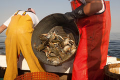 Crab fishing Royalty Free Stock Photography