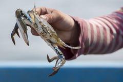 Crab fishing on the Lake Maracaibo, Venezuela Royalty Free Stock Images