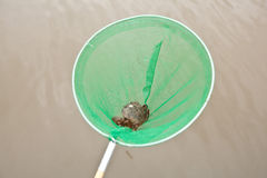 Crab in fishing net Stock Photography