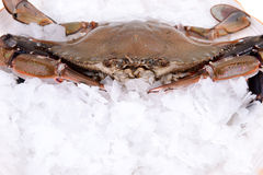 Crab freeze in ice Royalty Free Stock Image