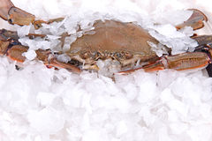 Crab freeze in ice Royalty Free Stock Photos