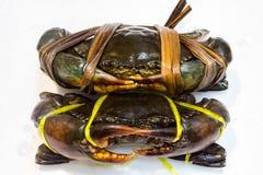 Crab fresh Royalty Free Stock Photo