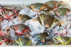 Crab in fresh market at ferry of Angsila, Choburi, Thailand.Sea. Food Stock Photos