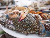 Raw crab. Fresh raw crab on dish Stock Photo