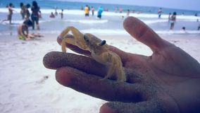 Crab Friend. Beach, sun and sand next to a very observant yellow crab Stock Photos