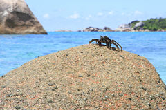 Crab on the granite boulders in shore of Indian Royalty Free Stock Photo