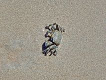 Crab half buried in the sand on the Seychelles Stock Image