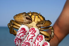Crab in hand Royalty Free Stock Images