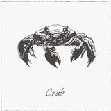 Crab. Hand drawn sketch. Collection of seafood. Royalty Free Stock Photo