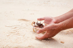 Crab in hands Stock Photos
