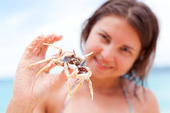 Crab in hands Stock Photography