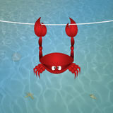 Crab hanging on the water Royalty Free Stock Photos