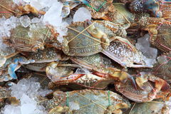Crab heap Royalty Free Stock Photography