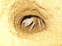 Crab hiding in sand in a beach Stock Images