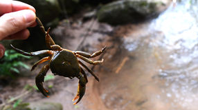 Crab holded by hand Royalty Free Stock Photos