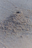 Crab hole on the beach Stock Photos