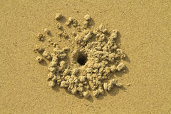 Crab hole in the sand royalty free stock photos